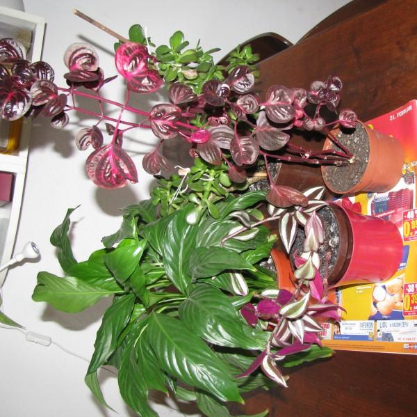 Sobne Rastline Sobne Rastline Različne